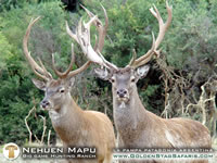 big-game-hunting-ranch-034.jpg (108kb)